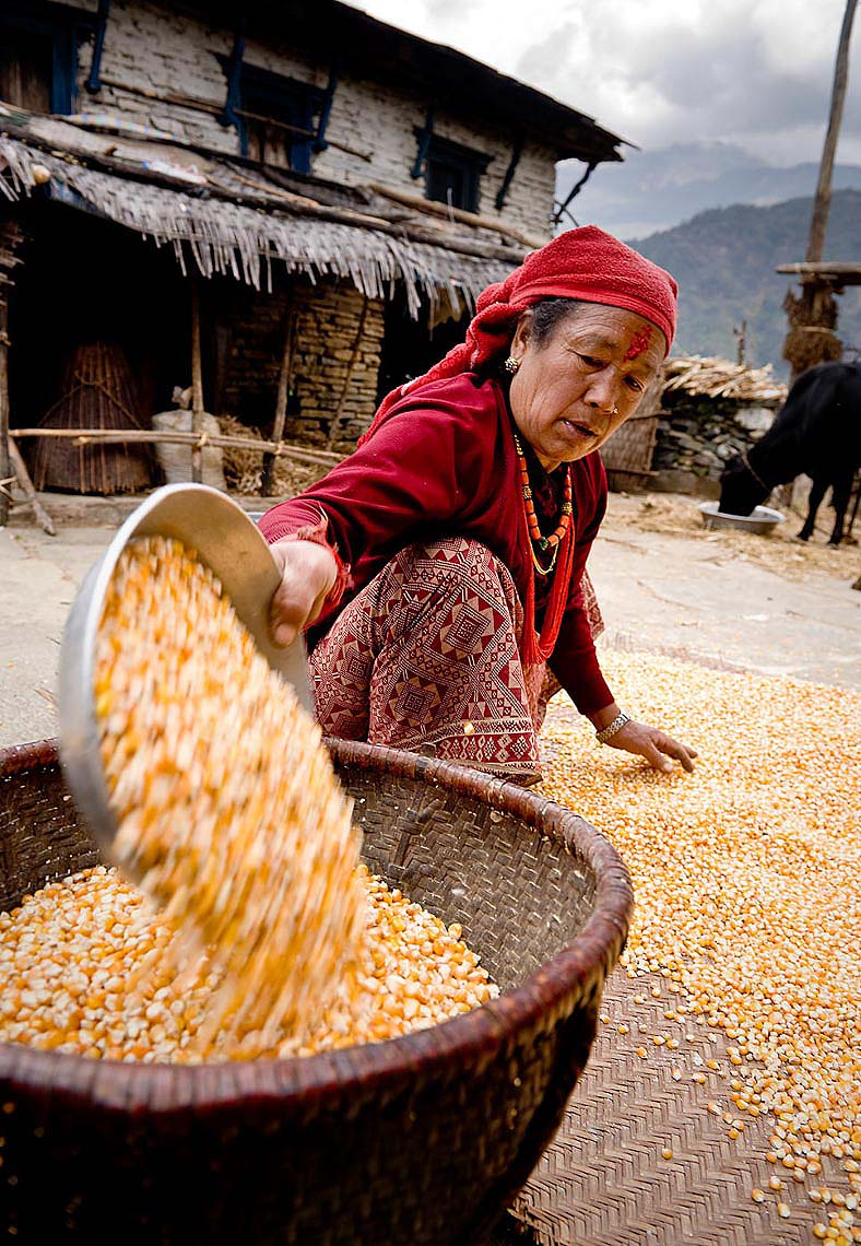 grains-tradition-ghandruk-annapurna-himalaya-life-manual-labour-rural-nepal-26