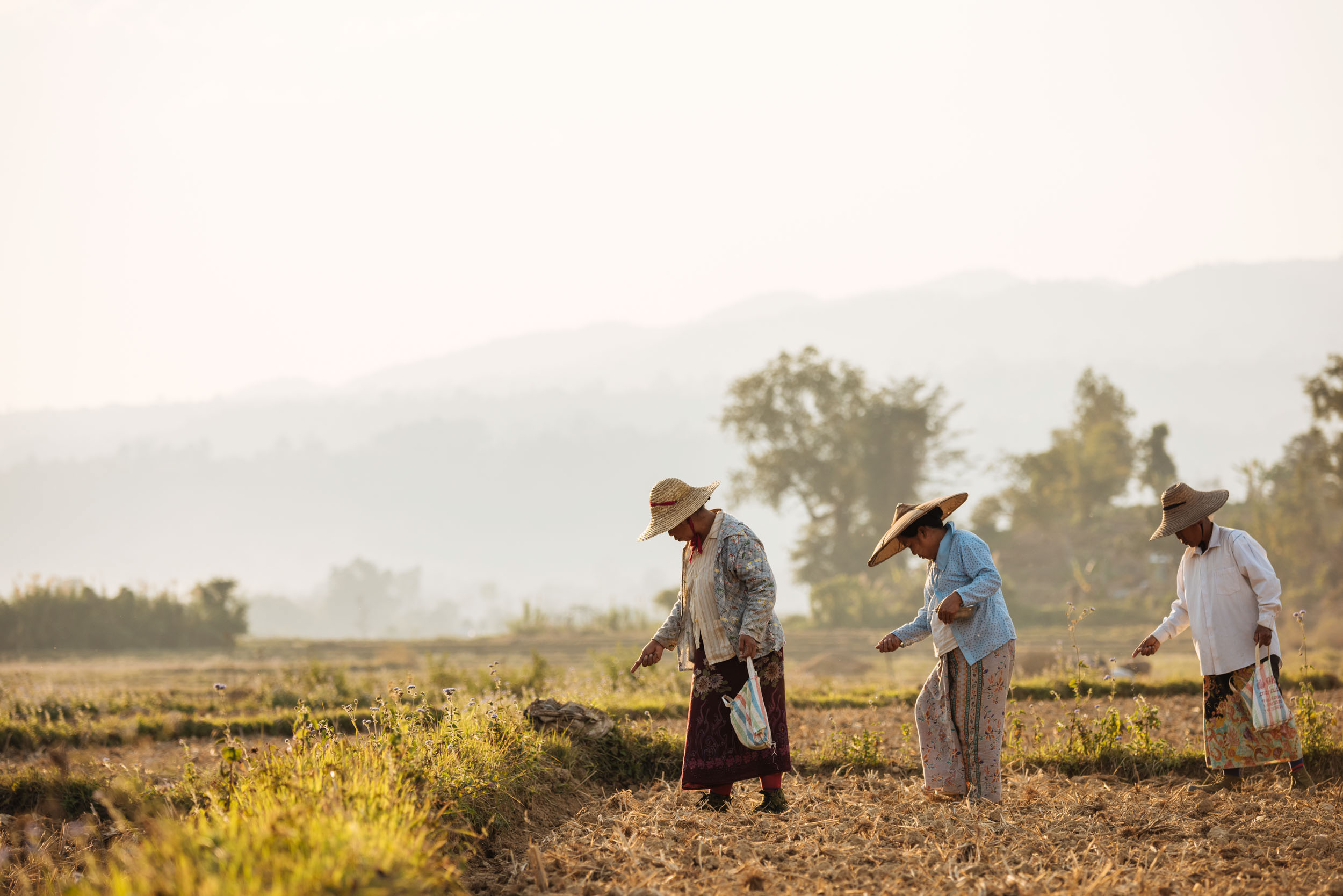 people-working-agriculture-fields-hispaw-myanmar