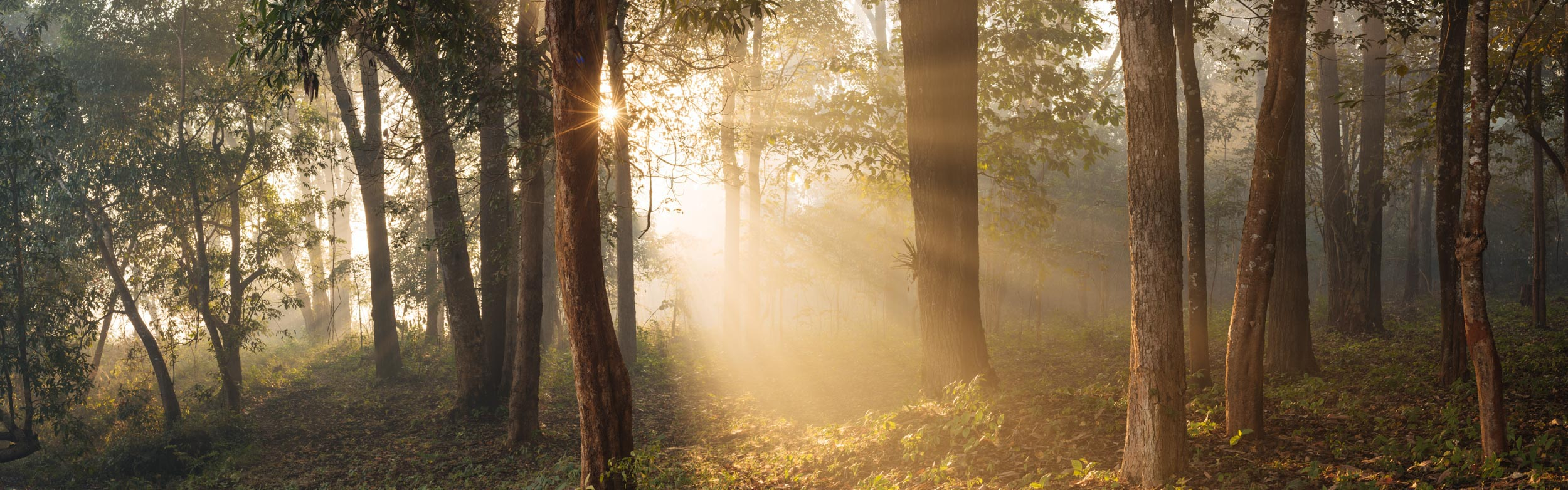 sunrise-dawn-forest-woods-landscape-photography-hsipaw-shan-myanmar